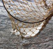 Gevangen Vissen Stock Afbeelding