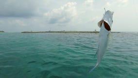 Gevangen vissen op een haak stock footage