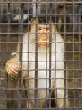Gevangene Royalty-vrije Stock Afbeeldingen
