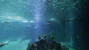 Gevarieerde vissen en amfibieen in een reuzeaquarium voor vermaak aan toeristen stock videobeelden