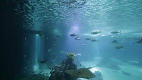 Gevarieerde vissen en amfibieen in een reuzeaquarium voor vermaak aan toeristen stock video