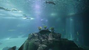 Gevarieerde vissen en amfibieen in een reuzeaquarium voor vermaak aan toeristen stock footage