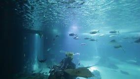 Gevarieerde vissen en amfibieen in reuzeaquarium voor vermaak aan toeristen stock footage