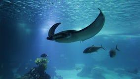 Gevarieerde vissen en amfibieen in reuzeaquarium voor vermaak aan toeristen stock videobeelden