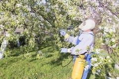 Gevend voor fruitbomen, het tuinieren De tuinman bestrooit bomen royalty-vrije stock fotografie