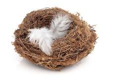 Gevlogen het Nest royalty-vrije stock fotografie