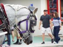 gevoed paard Royalty-vrije Stock Foto
