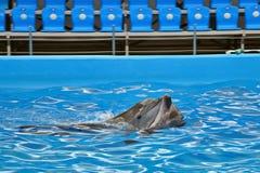 Gevoel van dolfijnen Royalty-vrije Stock Foto