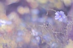 Gevoelig bloemenlinnen op een lilac achtergrond Een artistiek beeld Zachte, selectieve nadruk Royalty-vrije Stock Afbeeldingen
