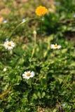 Gevoelig gebied van bloemen Royalty-vrije Stock Fotografie