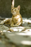 Gevoelig katje royalty-vrije stock foto's