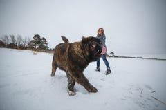 Gevoelig meisje met haar grote Kaukasische Herdershond die pret in de winterbos hebben stock afbeelding