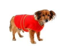 Gevoelig voor koude hond 2 royalty-vrije stock fotografie