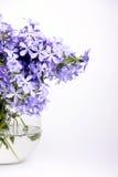Gevoelige blauwe bloemen Stock Foto's