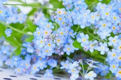 Gevoelige blauwe bloemen vergeten-me- Stock Afbeeldingen