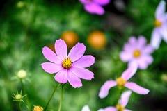 Gevoelige bloeiende bloemen in een de zomer groene tuin stock afbeelding