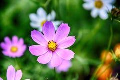 Gevoelige bloeiende bloemen in een de zomer groene tuin royalty-vrije stock foto
