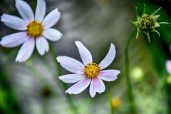 Gevoelige bloeiende bloemen in een de zomer groene tuin stock fotografie