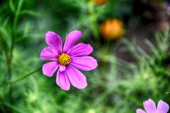 Gevoelige bloeiende bloemen in een de zomer groene tuin royalty-vrije stock foto's