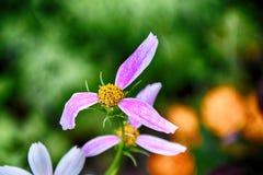 Gevoelige bloeiende bloemen in een de zomer groene tuin stock afbeeldingen