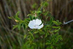 Gevoelige bloem aan de meerkant royalty-vrije stock fotografie