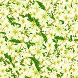 Gevoelige bloemen royalty-vrije stock foto's