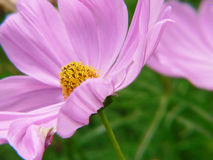 Gevoelige bloemen Royalty-vrije Stock Afbeelding