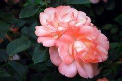 Gevoelige bloemen Stock Foto's