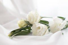 Gevoelige bloemen Royalty-vrije Stock Afbeeldingen
