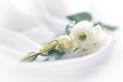 Gevoelige bloemen Royalty-vrije Stock Fotografie