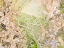 Gevoelige bloemenachtergrond Stock Afbeeldingen