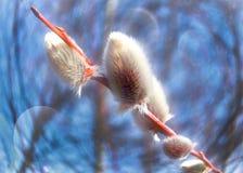 Gevoelige de lente pluizige 'kat ' stock foto