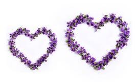 Gevoelige de lenteviooltjes in de vorm van een hart op een witte backg Stock Fotografie