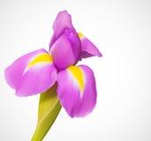 Gevoelige exotische bloem Stock Afbeelding