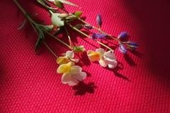 Gevoelige gebieds wilde bloemen stock afbeelding