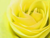 Gevoelige geel rosebud nam close-up toe Royalty-vrije Stock Afbeeldingen
