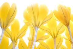 Gevoelige gele bloemen Royalty-vrije Stock Fotografie