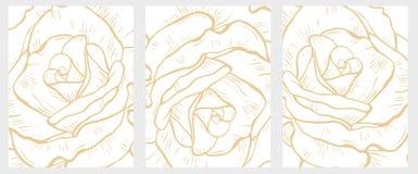 Gevoelige Hand Getrokken Bloemen Vector Geplaatste Illustraties Groot Gouden Abstract Rozendetail royalty-vrije illustratie