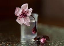 Gevoelige lilac bloem stock afbeelding