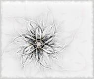 Gevoelige pluizige bloem Royalty-vrije Stock Afbeeldingen