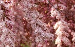 Gevoelige purpere bloemenachtergrond Royalty-vrije Stock Afbeeldingen