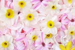 Gevoelige roze hyacint en van de gele narcissen bloeiende lente bloemen royalty-vrije stock afbeelding