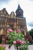 Gevoelige roze rozen voor de Kathedraal waar het graf van Immanuel Kant, Kaliningrad, Rusland wordt gevestigd stock foto's