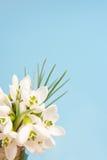Gevoelige sneeuwklokjes op een blauw Royalty-vrije Stock Afbeeldingen