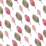 Gevoelige transparante bladeren op een witte achtergrond Stock Fotografie