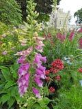 Gevoelige wilde bloemen in plattelandsweide royalty-vrije stock afbeeldingen