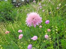 Gevoelige wilde bloemen in plattelandsweide stock fotografie