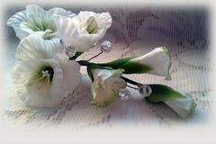 Gevoelige witte bloemen Stock Foto's