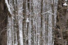 Gevoerde bomen Royalty-vrije Stock Foto