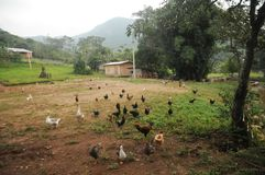 Gevogeltelandbouwbedrijf in Zuidelijk Brazilië royalty-vrije stock fotografie